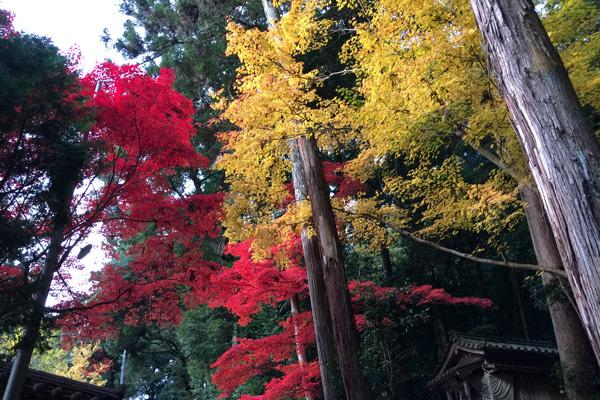 瑞光院・大黒堂近辺の紅葉