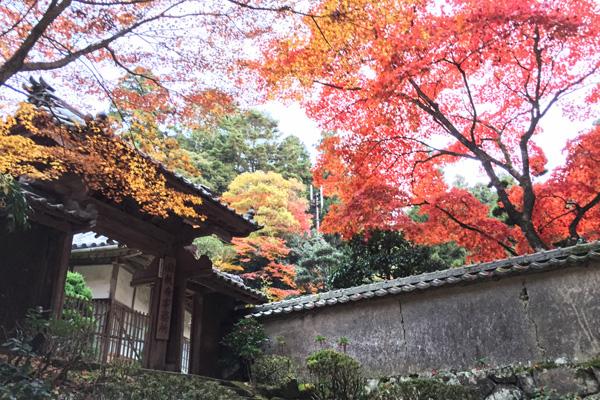 寺務所付近の紅葉